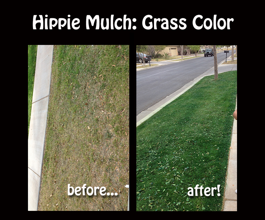 About Grass Color
